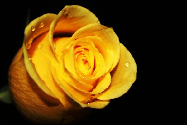 Photograph - Yellow by Rebecca Frank