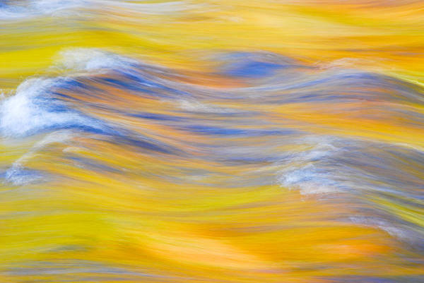 Photograph - Yellow Reflection by Michael Hubley