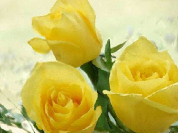 Painting - Yellow Roses For A Friend by Dennis Buckman