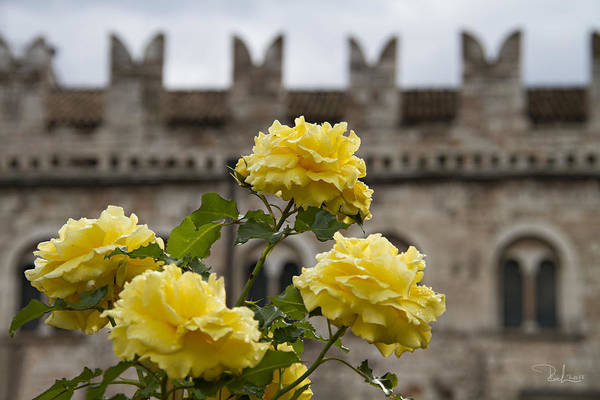 Photograph - Yellow Roses by Raffaella Lunelli