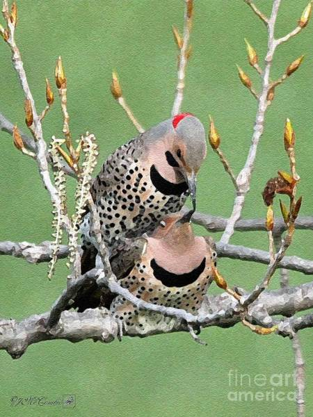 Northern Flicker Painting - Yellow-shafted Northern Flickers by J McCombie