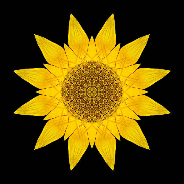 Photograph - Yellow Sunflower X Flower Mandala by David J Bookbinder