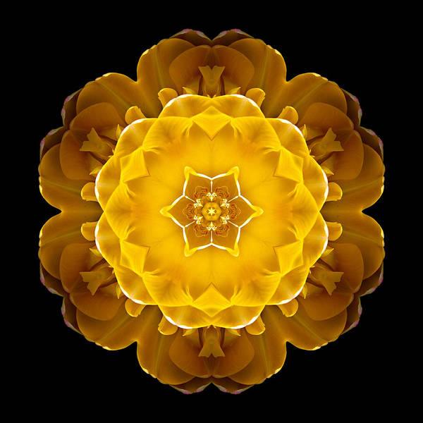 Photograph - Yellow Tulip II Flower Mandala by David J Bookbinder