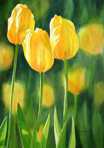 Realistic Flower Wall Art - Painting - Yellow Tulips by Sharon Freeman