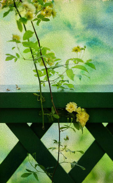 Oil Paint Photograph - Yellow Vine by Rebecca Cozart