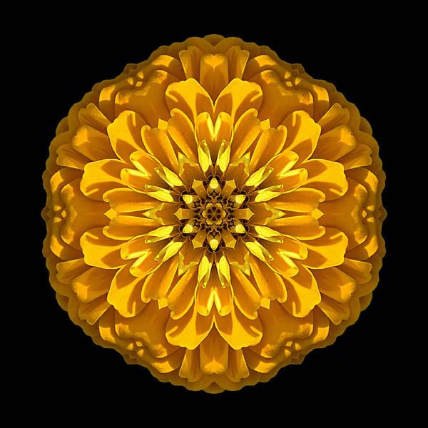 Photograph - Yellow Zinnia Elegans Flower Mandala by David J Bookbinder