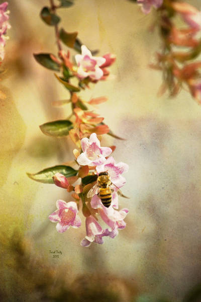 Photograph - Yellowjackets Love Pink by Trish Tritz