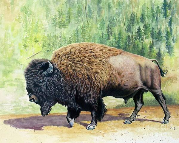 Drawing - Yellowstone Bison by Rosellen Westerhoff