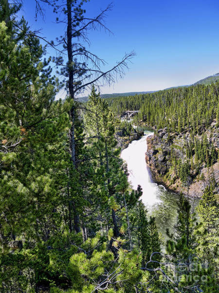 Photograph - Yellowstone Falls by Brenda Kean