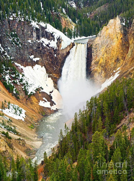 Yellowstone Canyon Photograph - Yellowstone Falls In Spring Time by Jamie Pham
