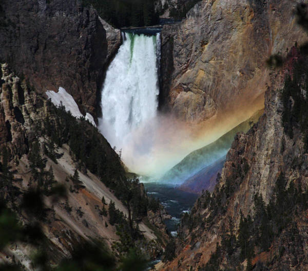 Yellowstone Lower Falls Rainbow Art Print