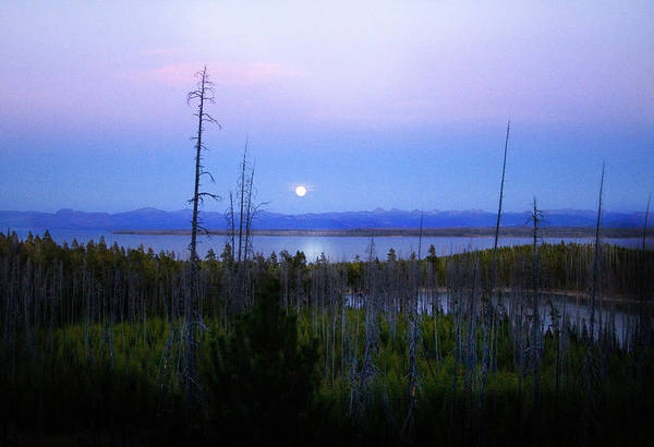Photograph - Yellowstone Moon by Ann Lauwers