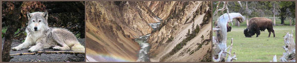Wall Art - Photograph - Yellowstone National Park Montana  3 Panel Composite by Thomas Woolworth