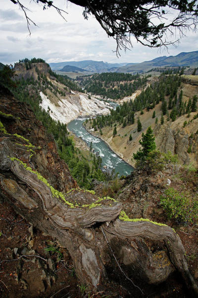 Roosevelt National Forest Photograph - Yellowstone River by Peter Falkner/science Photo Library