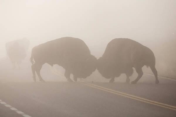 Wall Art - Photograph - Yellowstone Roadblock by Sandy Sisti