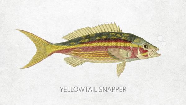 Wall Art - Digital Art - Yellowtail Snapper by Aged Pixel