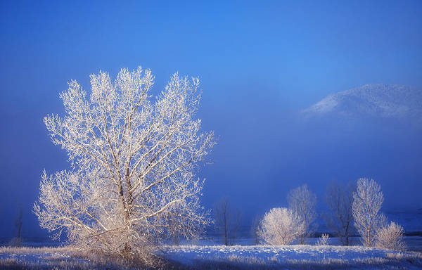 Freezing Photograph - Yesterday's Blues by Darren  White