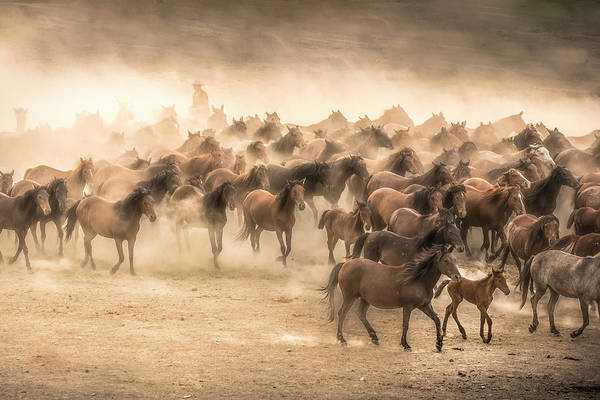 Herd Photograph - Yilki by Tunc Tuncel