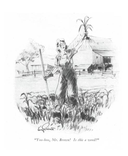 Agriculture Drawing - Yoo-hoo, Mr. Brown! Is This A Weed? by Kemp Starrett