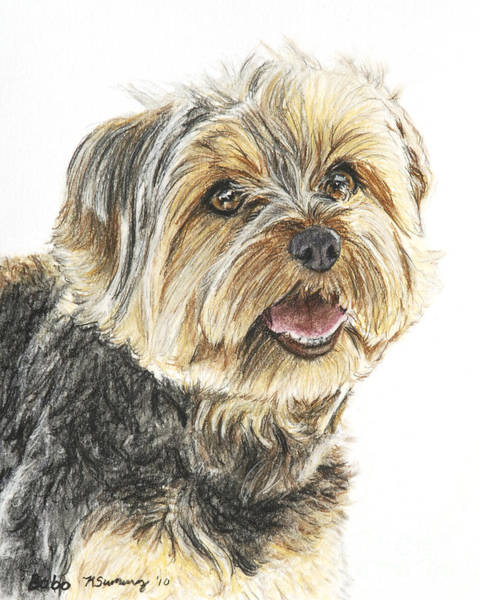 Art Print featuring the pastel Yorkie In Color by Kate Sumners