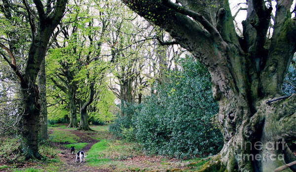 Wall Art - Photograph - Yorkshire Forest Walk by Merice Ewart