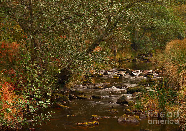 Yorkshire Moors Stream In Autumn Art Print