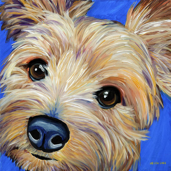 Yorkie Wall Art - Painting - Yorkshire Terrier by Melissa Smith