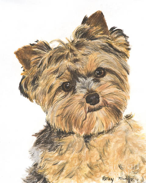 Painting - Yorkshire Terrier Portrait by Kate Sumners