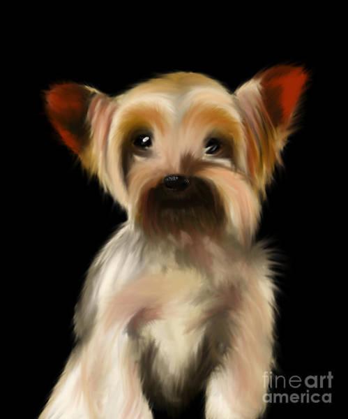 Yorkshire Terrier Pup Art Print