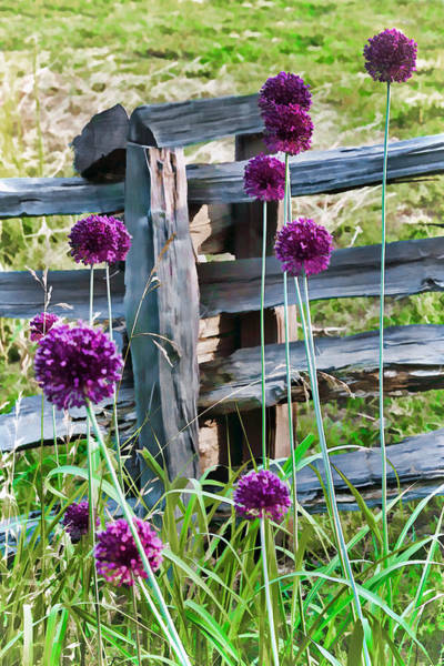 Photograph - Yorktown Onions by Jerry Gammon