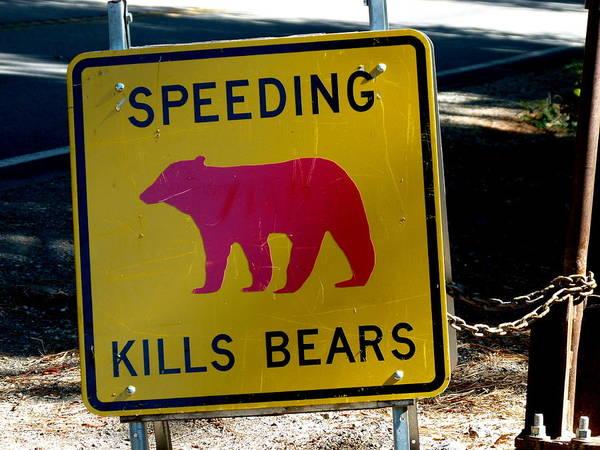 Yosemite Bear Sign Speeding Kills Bears Art Print