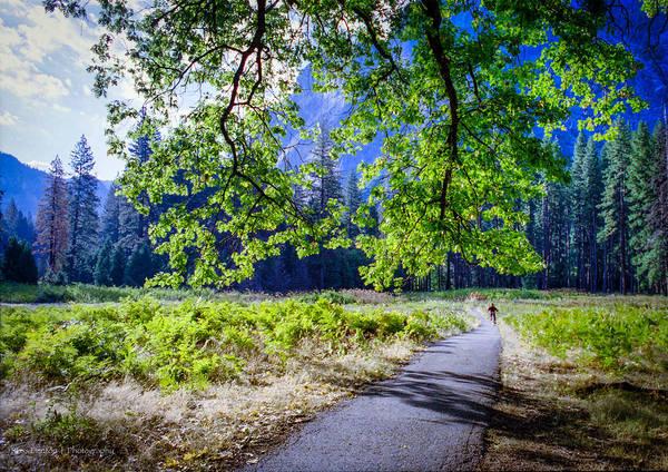 Photograph - Yosemite Cyclist by Ross Henton