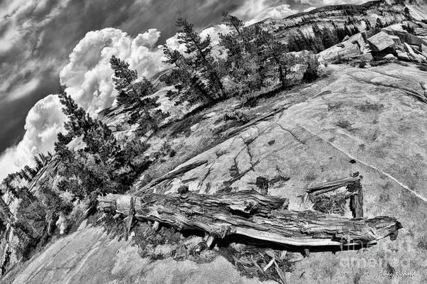 Photograph - Yosemite Fallen Tree by Blake Richards