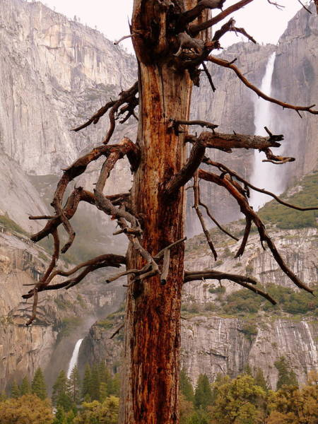 Photograph - Yosemite Falls Upper Lower Dead Tree by Jeff Lowe