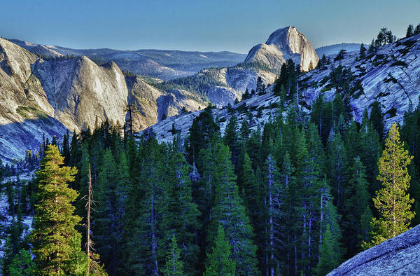 Conifer Photograph - Yosemite National Park, Ca, Half Dome by Mark Williford