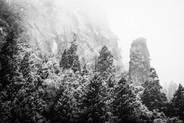 Photograph - Yosemite Snow by Priya Ghose