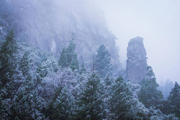 Photograph - Yosemite Snow Storm by Priya Ghose
