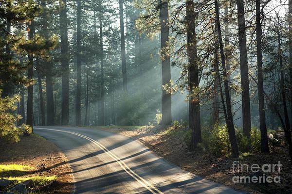 Wall Art - Photograph - Yosemite Sunlight by Jane Rix