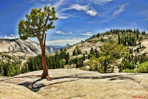 Photograph - Yosemite Tree Wispy Clouds by Blake Richards
