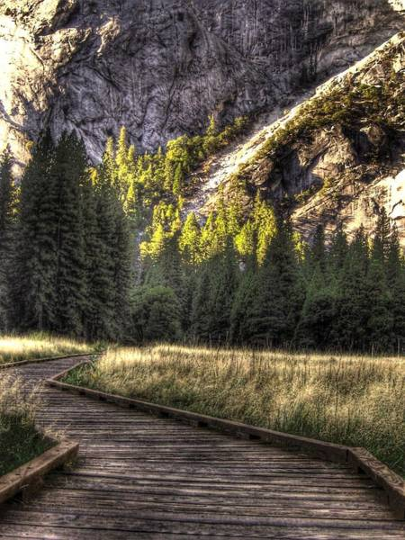 Wall Art - Photograph - Yosemite National Park Path by Jane Linders