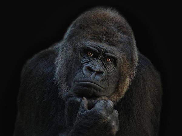 Primate Photograph - You Ain T Seen Nothing Yet by Joachim G Pinkawa