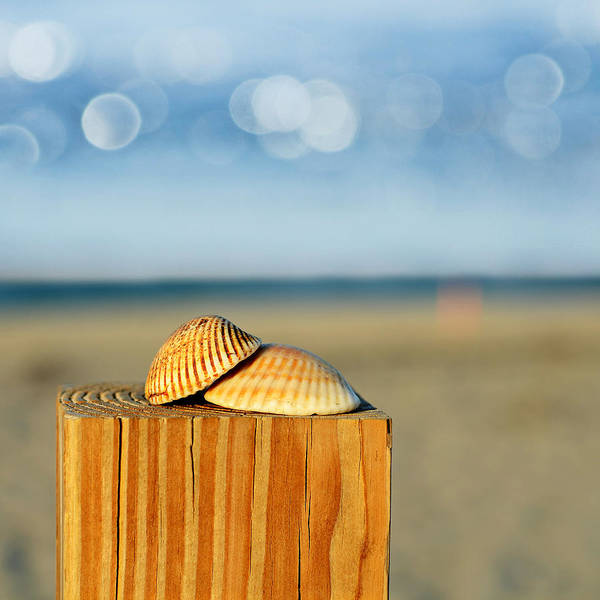Fence Post Photograph - You And Me by Laura Fasulo