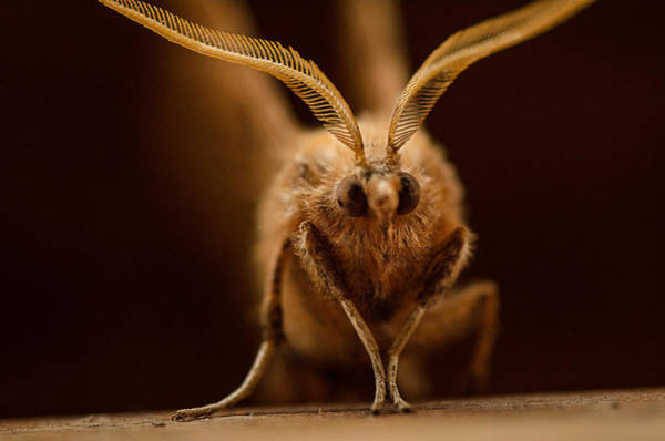 Moth Photograph - You Are In My Space by Susan Capuano