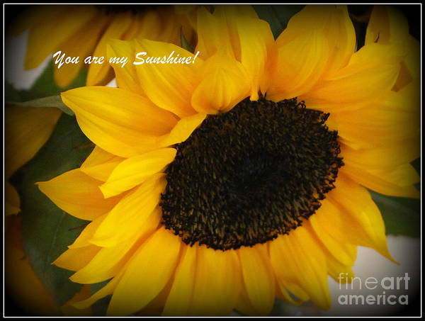 Wall Art - Photograph - You Are My Sunshine - Greeting Card by Dora Sofia Caputo Photographic Design and Fine Art
