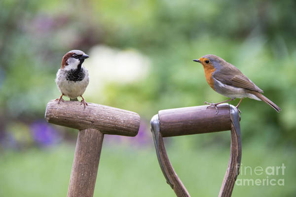 English Garden Photograph - You Gotta Friend  by Tim Gainey
