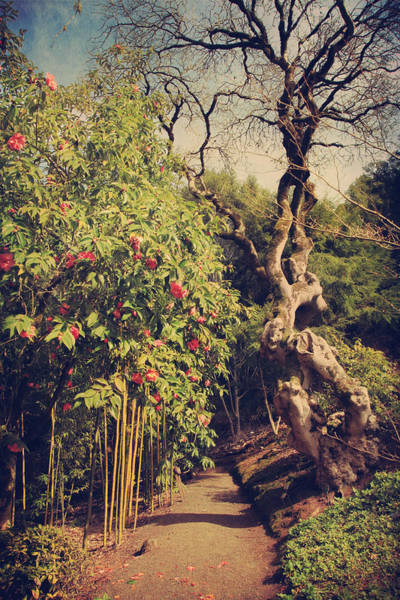 Garden Path Photograph - You'll Never Be Alone by Laurie Search