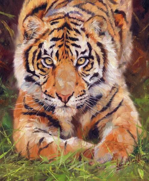 Siberian Tiger Wall Art - Painting - Young Amur Tiger by David Stribbling