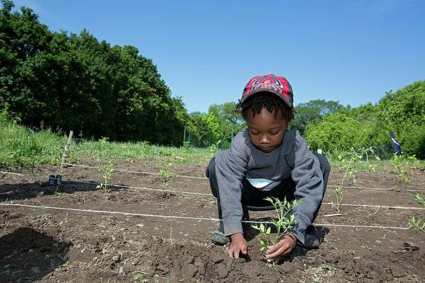 Security Service Photograph - Young Boy Planting Tomatoes by Jim West