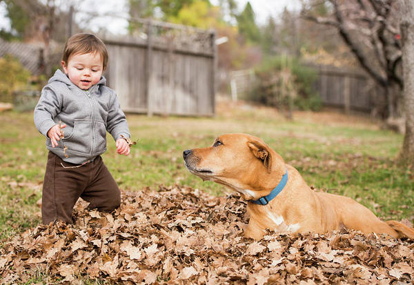 Wall Art - Photograph - Young Boy Playing In Leaves With Dog by Josh Miller Photography