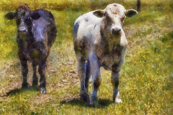 Painting - Young Bulls by Barry Jones